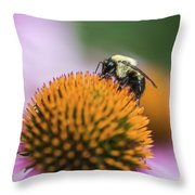 Busy Bee On Cone Flower Throw Pillow