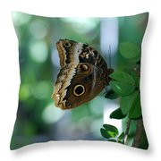 Buterfly 4 Throw Pillow