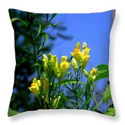 Butter And Egg Wildflower Throw Pillow