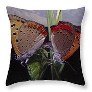 Butterfly 001 Throw Pillow