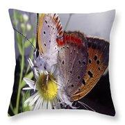 Butterfly 002 Throw Pillow