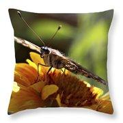 Butterfly 004 Throw Pillow