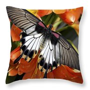 Butterfly 006 Throw Pillow