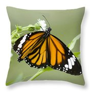Butterfly 009 Throw Pillow