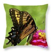 Butterfly 011 Throw Pillow