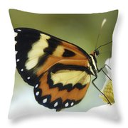 Butterfly 013 Throw Pillow
