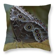 Butterfly 015 Throw Pillow
