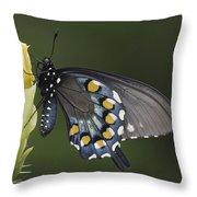 Butterfly 016 Throw Pillow