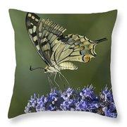 Butterfly 020 Throw Pillow