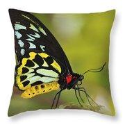 Butterfly 022 Throw Pillow