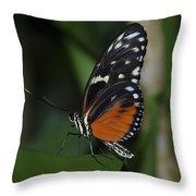 Butterfly 025 Throw Pillow