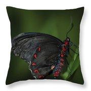 Butterfly 028 Throw Pillow