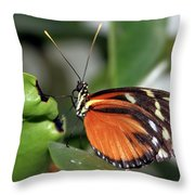 Key West Butterfly 2 Throw Pillow