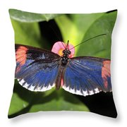 Key West Butterfly 3 Throw Pillow