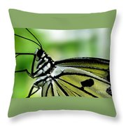 Butterfly 4 Throw Pillow