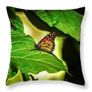 Butterfly 4 Throw Pillow