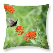 Butterfly A L'orange Throw Pillow