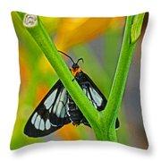 Butterfly An3597-13 Throw Pillow