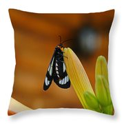 Butterfly An3606-13 Throw Pillow