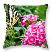 Butterfly And Sweet Williams Throw Pillow