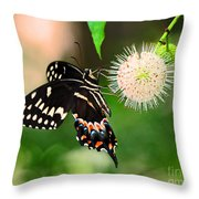 Butterfllies And The Crystal Balls Throw Pillow