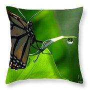 Butterfly And Water Throw Pillow