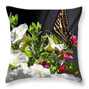 Swallowtail Butterfly On White Petunia Flower Throw Pillow