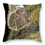 Butterfly At Night Throw Pillow