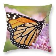 Butterfly Beauty-monarch II  Throw Pillow