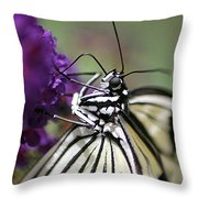 Butterfly Close Up  Throw Pillow