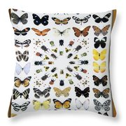 Butterfly Collection Throw Pillow