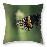 Butterfly E. Black Swallowtail Throw Pillow