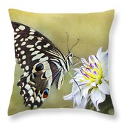 Butterfly Food At Dahlia Flower Throw Pillow