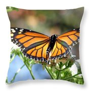 Butterfly Garden - Monarchs 13 Throw Pillow