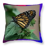 Butterfly Gold Photograph Insect Taken At Costa Rica Travel Vacation Unique Digital Painted Border B Throw Pillow