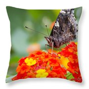 Butterfly Hanging Out On Wildflowers Throw Pillow