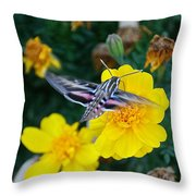 Butterfly Moth Throw Pillow