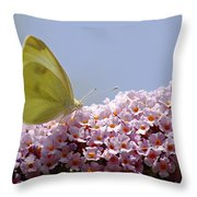 Butterfly On Buddleia Throw Pillow