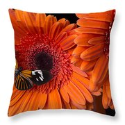 Butterfly On Orange Mums Throw Pillow by Garry Gay