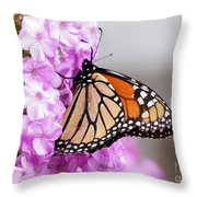 Butterfly On Phlox Flowers Throw Pillow