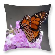 Butterfly On Phlox Throw Pillow