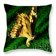 Butterfly On Pine Throw Pillow