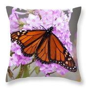 Butterfly On Pink Phlox Throw Pillow