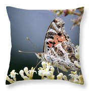 Butterfly - Painted Lady - Tasty Out Here Throw Pillow