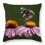 Butterfly Red Admiral On Echinacea Throw Pillow