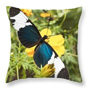 Butterfly Sara Longwing Throw Pillow
