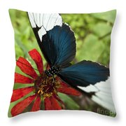Butterfly Sara Longwing II Throw Pillow