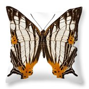 Butterfly Species Cyrestis Lutea Martini Throw Pillow