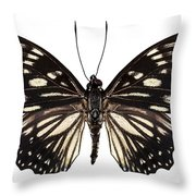 Butterfly Species Euripus Nyctelius Euploeoides  Throw Pillow