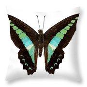 Butterfly Species Graphium Sarpedon Throw Pillow